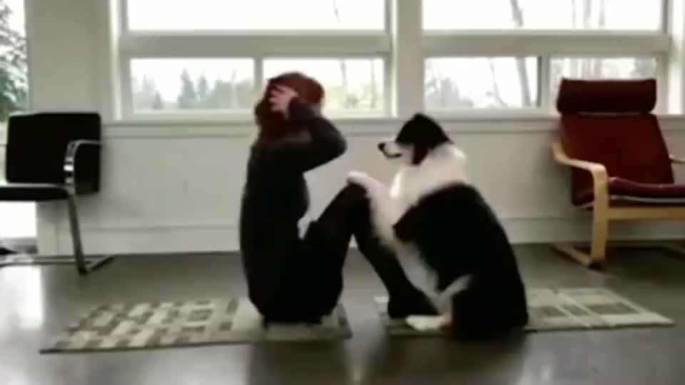 边牧:你离瑜伽也许只差一个陪练