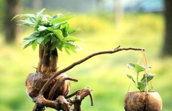 椰子壳是养花宝贝,张大妈用它做花盆、花肥,太全能了