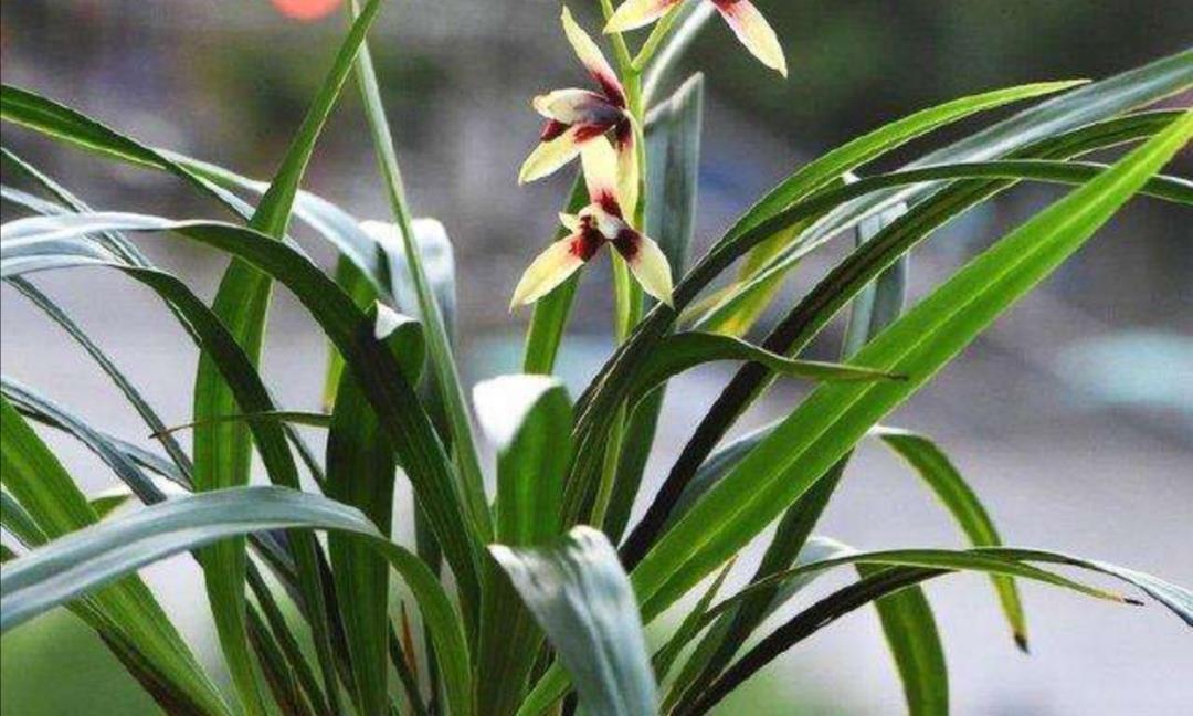 养兰花,选用几种常见的植料,透水透气不烂根,兰株长得旺