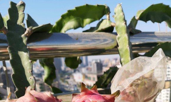 """阳台别养绿萝了,种3种""""水果""""盆栽,好看又好吃,新手也能养"""