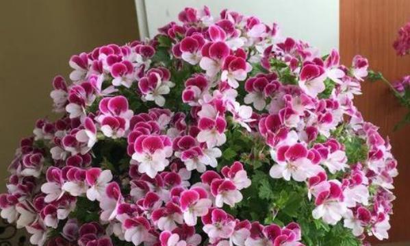 新手养什么花好,这些花卉好看又好养,让你从此爱上养花
