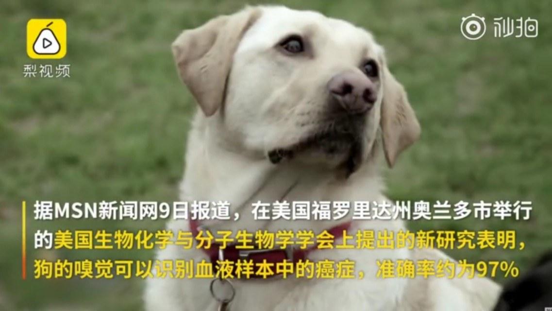 狗竟然能闻出癌症?真实案例:狗狗提醒我患乳腺癌,救了我一命