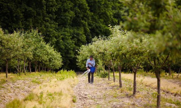 8月果树施什么肥好,夏秋季节如何给果树追肥,听听老农怎么说