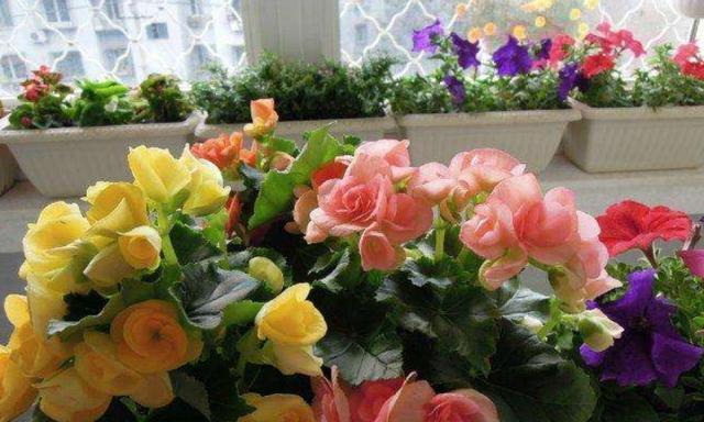 两种植物度夏难,提前扦插备份,成活率高,一盆变多盆