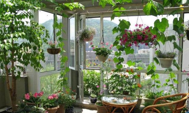 什么药片水、黄豆水,都不如家里2种灰,养花杀菌灭虫、补肥