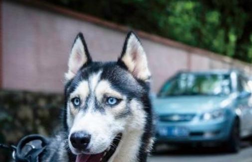 狗狗得狂犬病的六个症状,发现后请立马远离狗狗,联系相关部门!