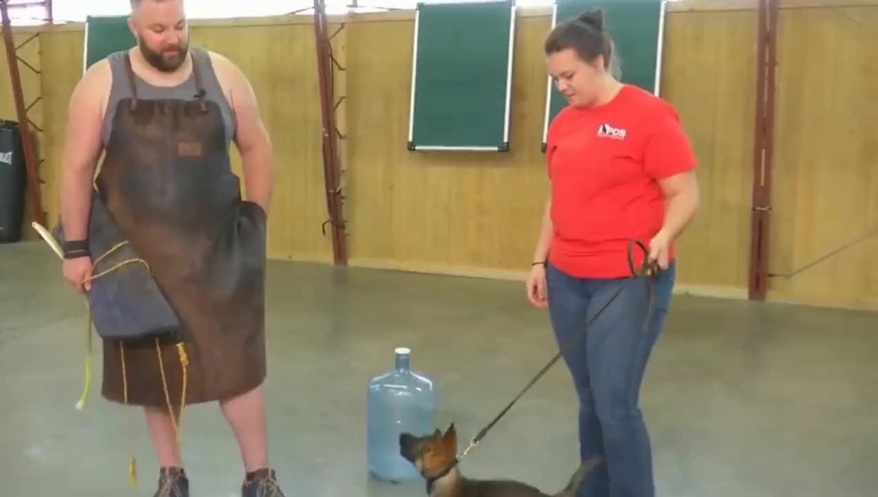 小警犬才一个多月大,就参加扑咬训练,训练师:是个好苗子