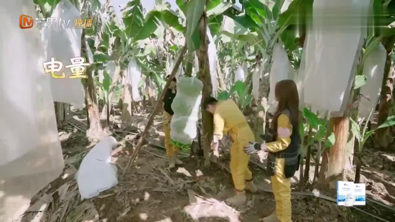 杨超越捡香蕉心想事成金瀚董力意外发财太幸福了吧