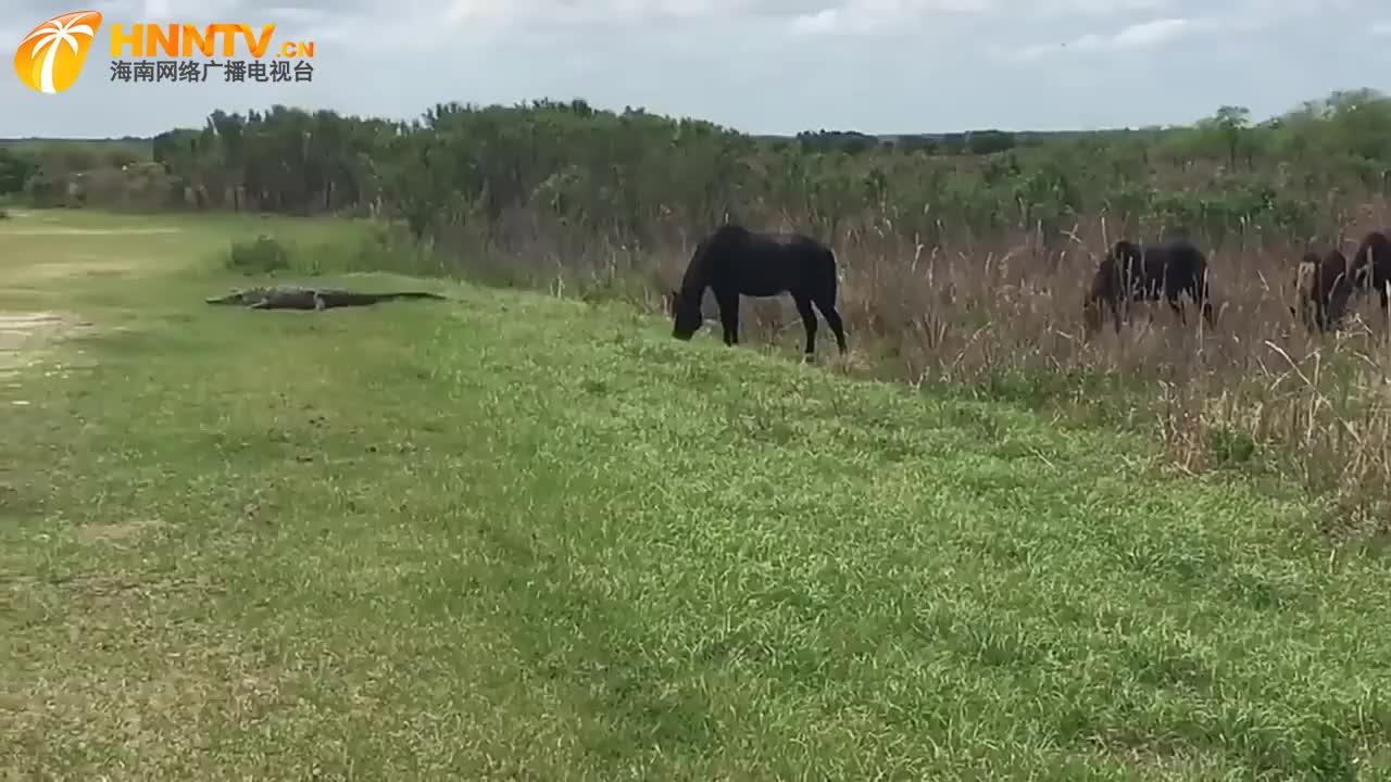 鳄鱼在草地,马儿抬头好几次,又默默埋下头,下一秒令人意外了