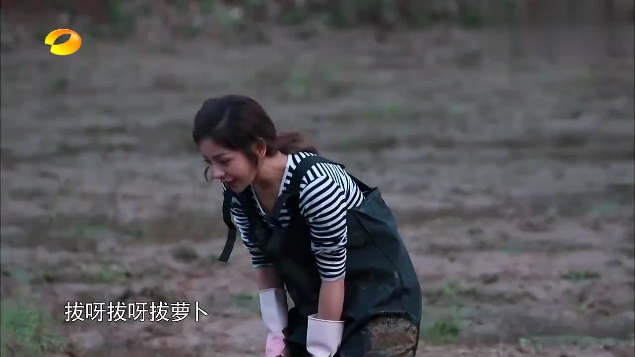彭彭插秧疯狂给土地下跪,大华每次都看见,笑到停不下来!