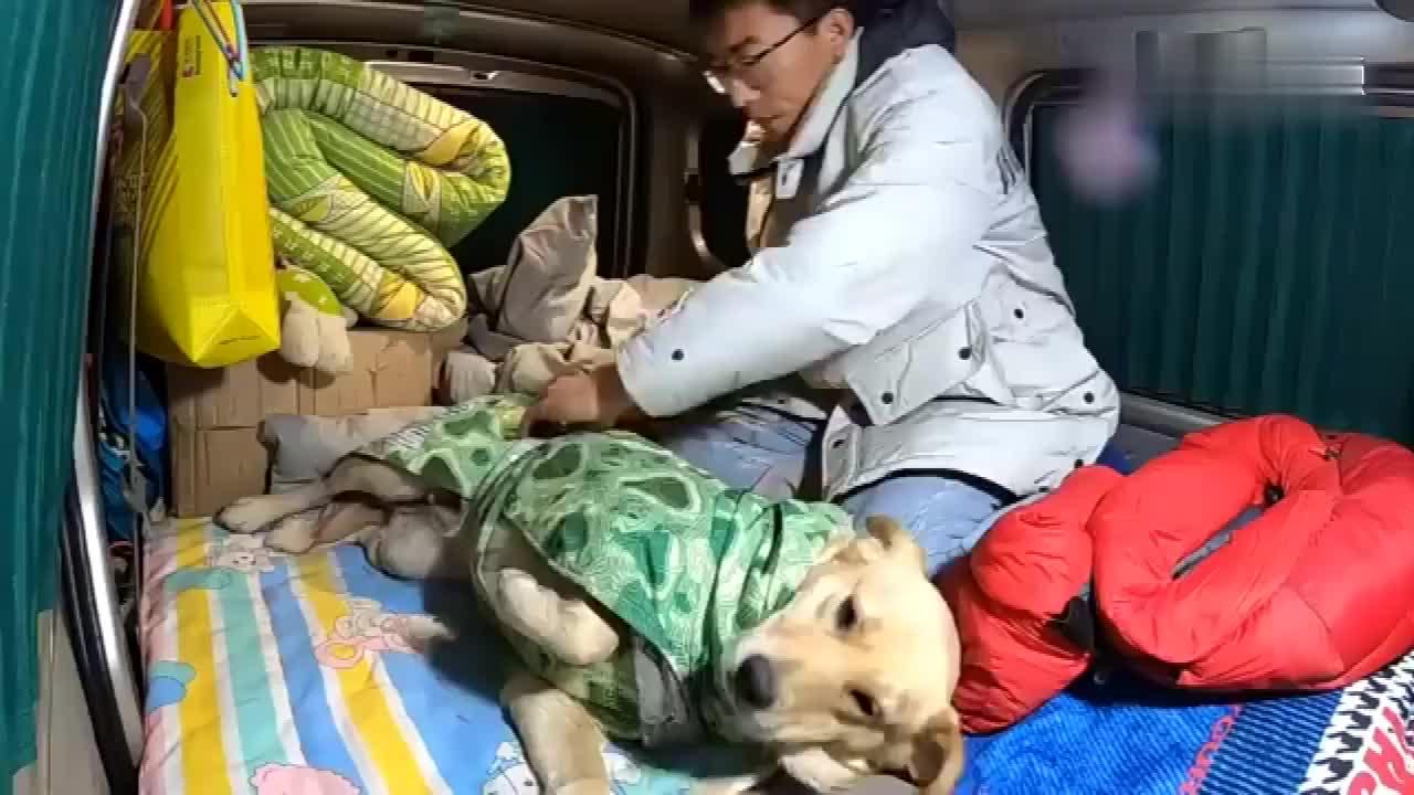 晚上零下20度跟狗狗睡车里胖妞秒睡还打呼噜