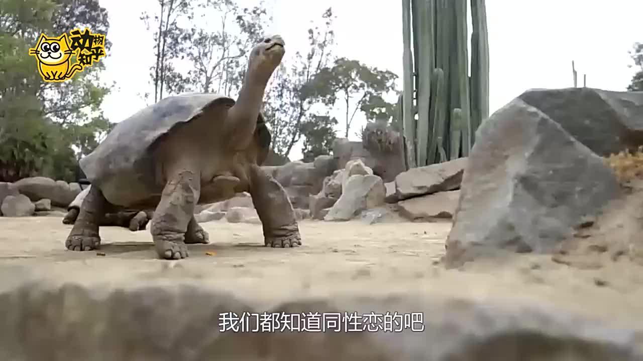 200岁老龟没有后代,兽医检查后发现,它的伴侣是公的