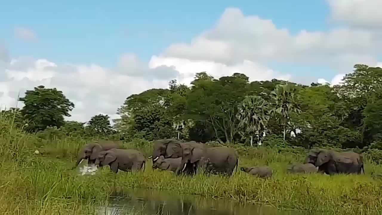 鳄鱼偷袭吃草大象,最后被象群胖揍,镜头记录全过程!