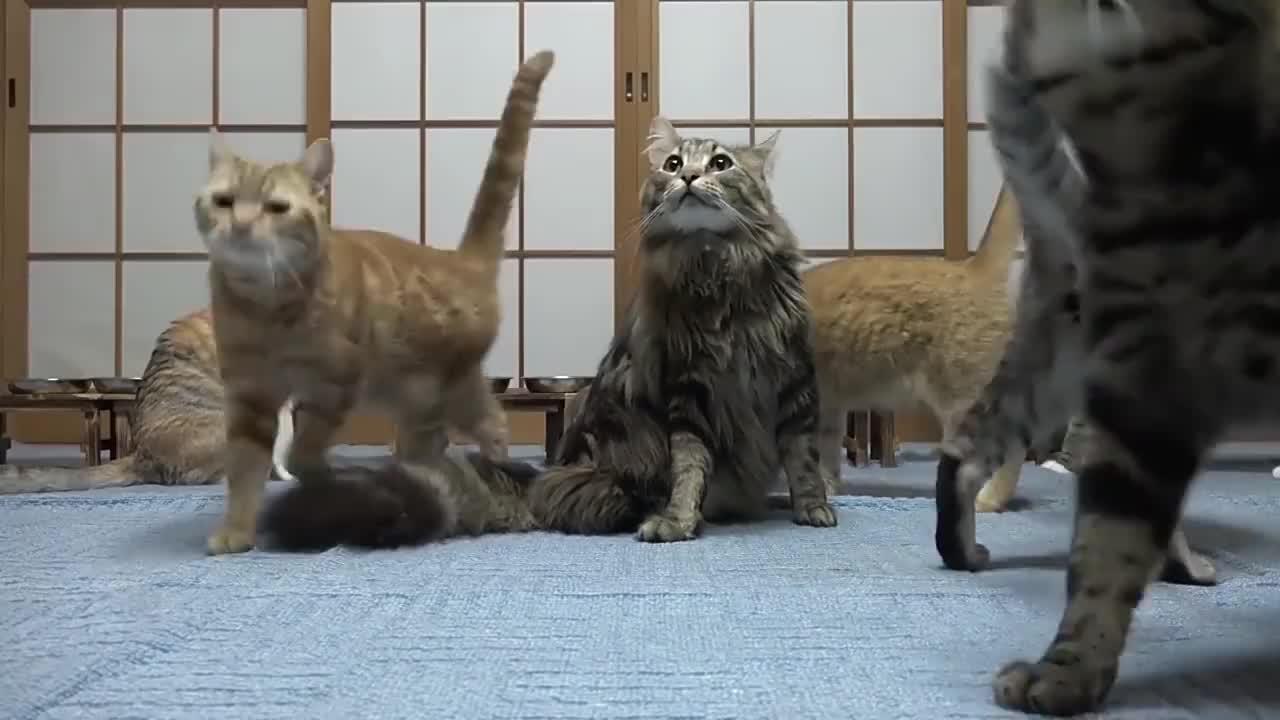 13只猫咪排排站吃饭,很有秩序,网友:太可爱了!