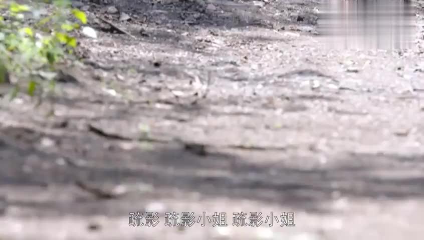 乱世丽人行:疏影小姐被找到,谢天赐好意关心疏影,却遭扇耳光!