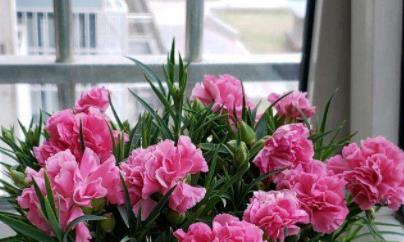 网购花苗不对版,几十棵开花都一个颜色,因为你没有学会4点!