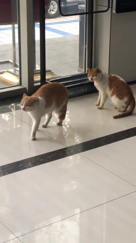 从外面跑来一只猫,刘萌萌仿佛看到了另外一个自己