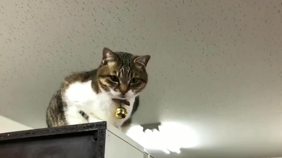 隔空撸猫,看看这只猫咪有什么有趣的回应?
