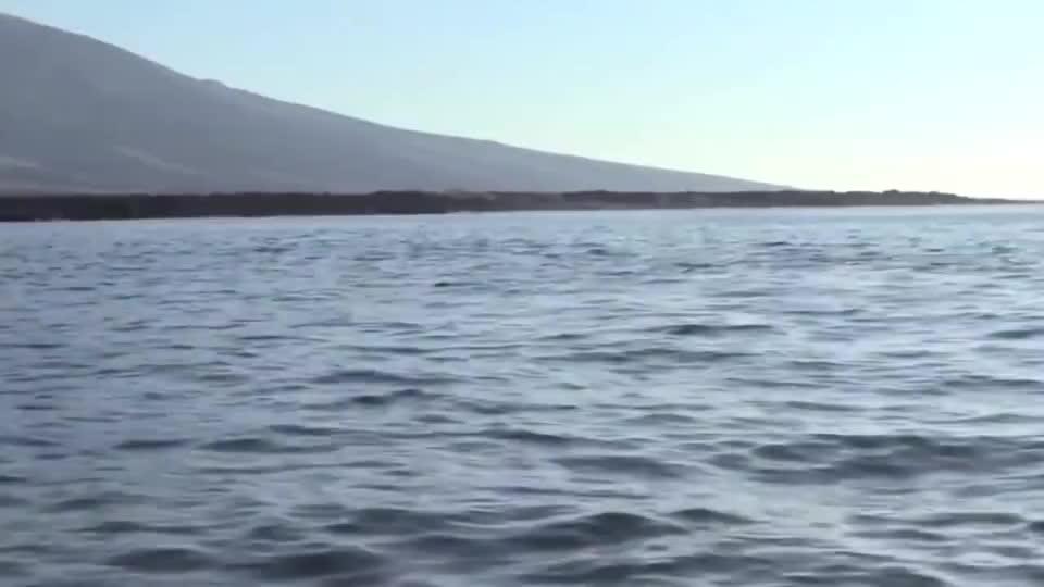 虎鲸抓住一只海龟,发现不能吃后恼羞成怒,接下来忍住别笑!