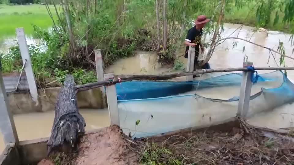 农村10公里长的水渠里,大叔拉网捞鱼,这里纯野生的小鱼太多了