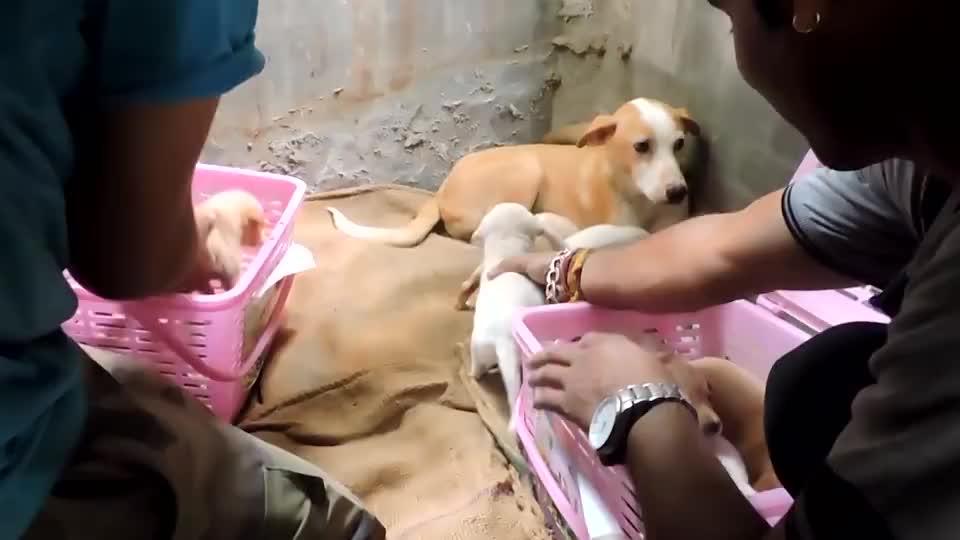 流浪狗闯入家中,祈求男子收养它的孩子,结局太暖心了