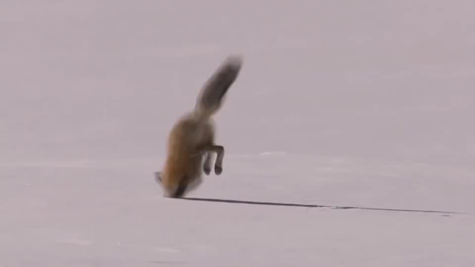 """1米深雪里有""""东西""""拼命挣扎,人们上前解救,发现事情不简单!"""