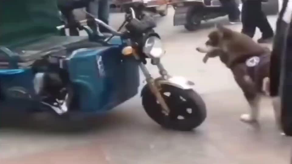 狗:主人,拉住我,千万别撤手