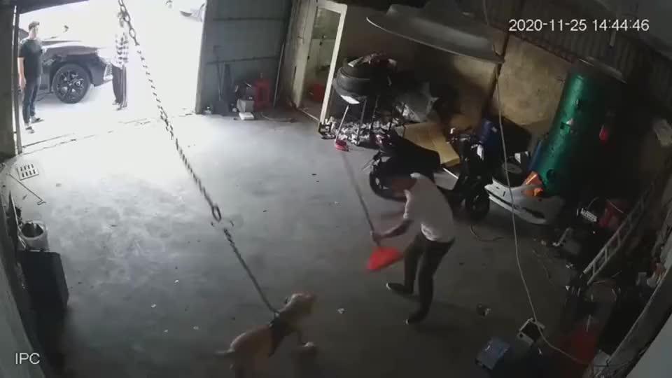 狗:你再过来试试看