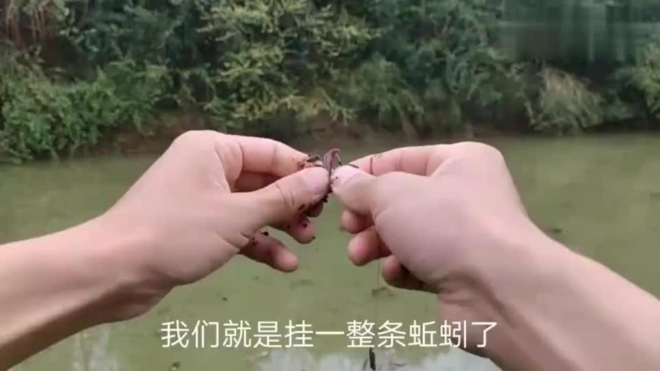 钓鱼:挂整条蚯蚓,也能上大货