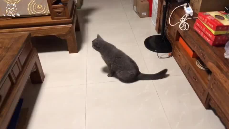 猫咪的谜之举动,晚上经常呆呆看着凳子,你们知道是为什么吗