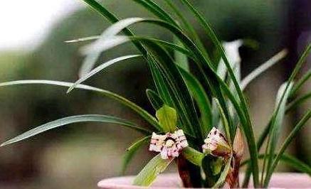 """兰花养得好,这种""""神仙水""""少不了,在家自制,免发酵没异味"""