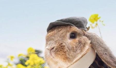 [个人养宠经验分享]垂耳兔便便异常,兔子拉稀不吃药会死吗