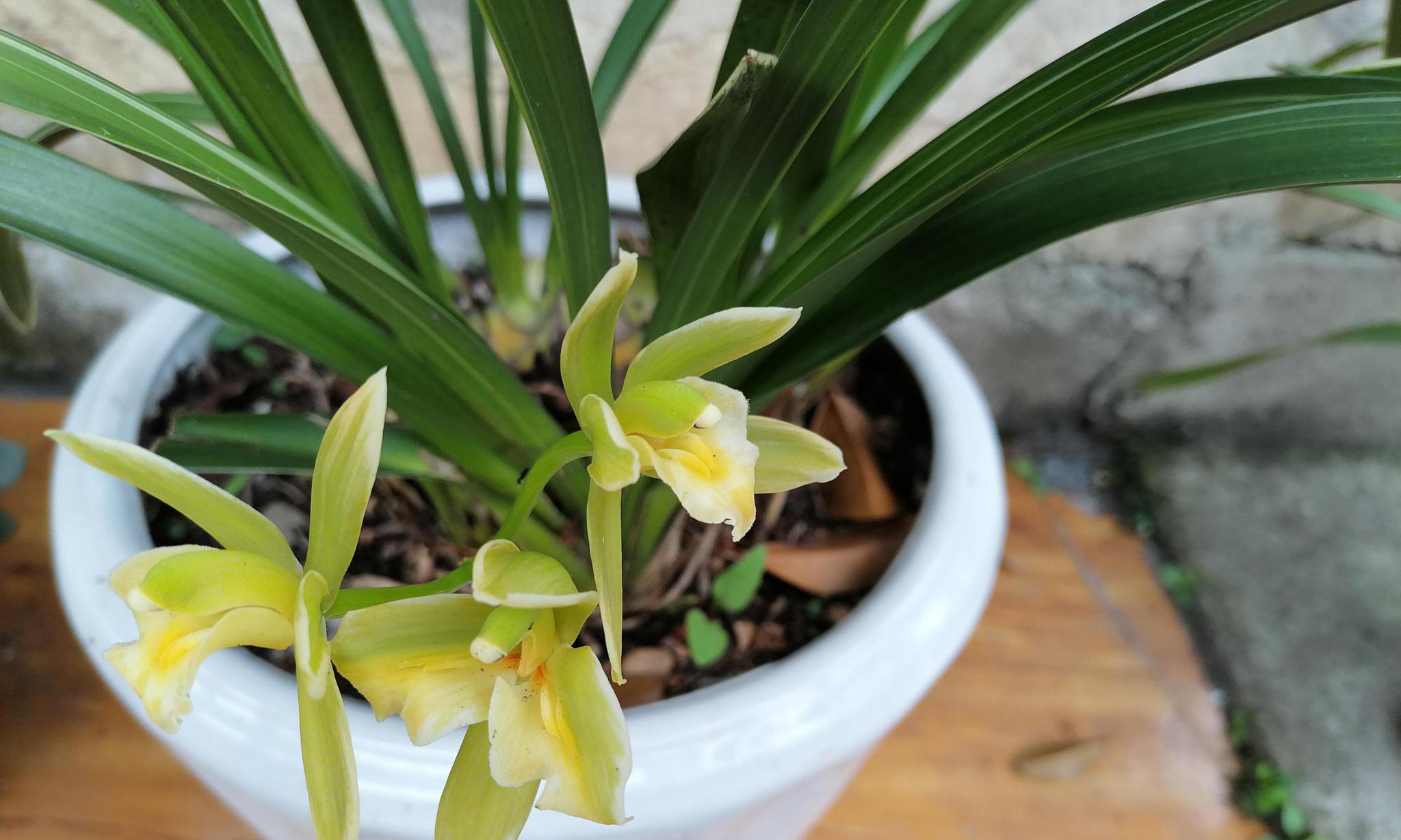 如何选择兰花质料,看看花友推荐的6种兰花基质,保根保花又好找