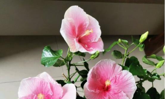 这几种花花期长,一年四季天天开花,美爆了!