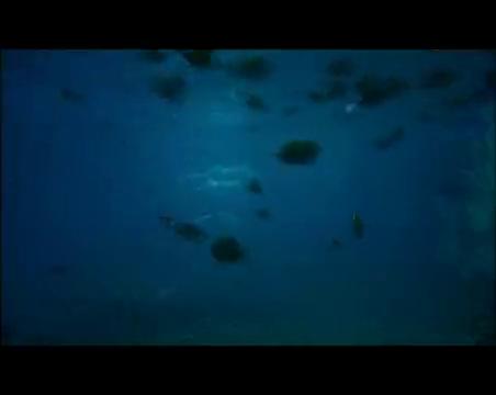 方华回忆和安琪的种种,富家千金:如果你不开心,就潜水吧!