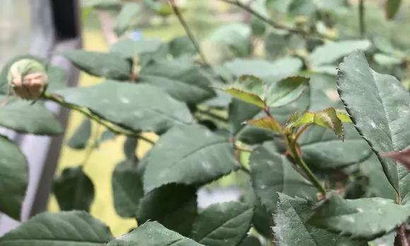 """秋天喷点""""杀菌水"""",黄叶烂根不见了,花草长得旺,好过冬"""