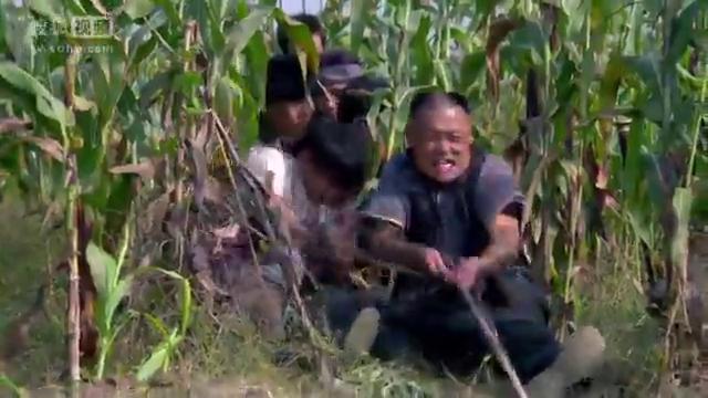 """一根绳子让杨紫从马车里""""飞""""了出去   正好砸中杨志刚!"""