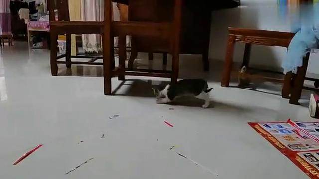 小猫咪丽的纸屑乐趣