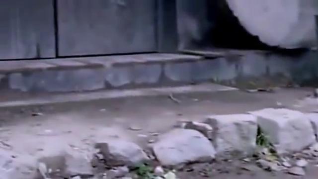 狐狸无意间救下一个小孩,不料下一秒,它彻底得到了改变!