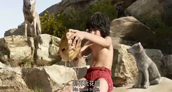上一秒动物们还舒服的喝着水,下一秒老虎来了