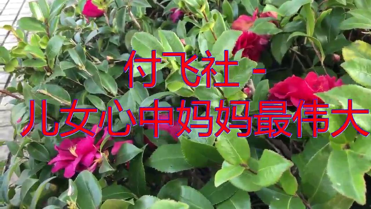 DJ何鹏《付飞社 - 儿女心中妈妈最伟大》,余音绕梁,真好听