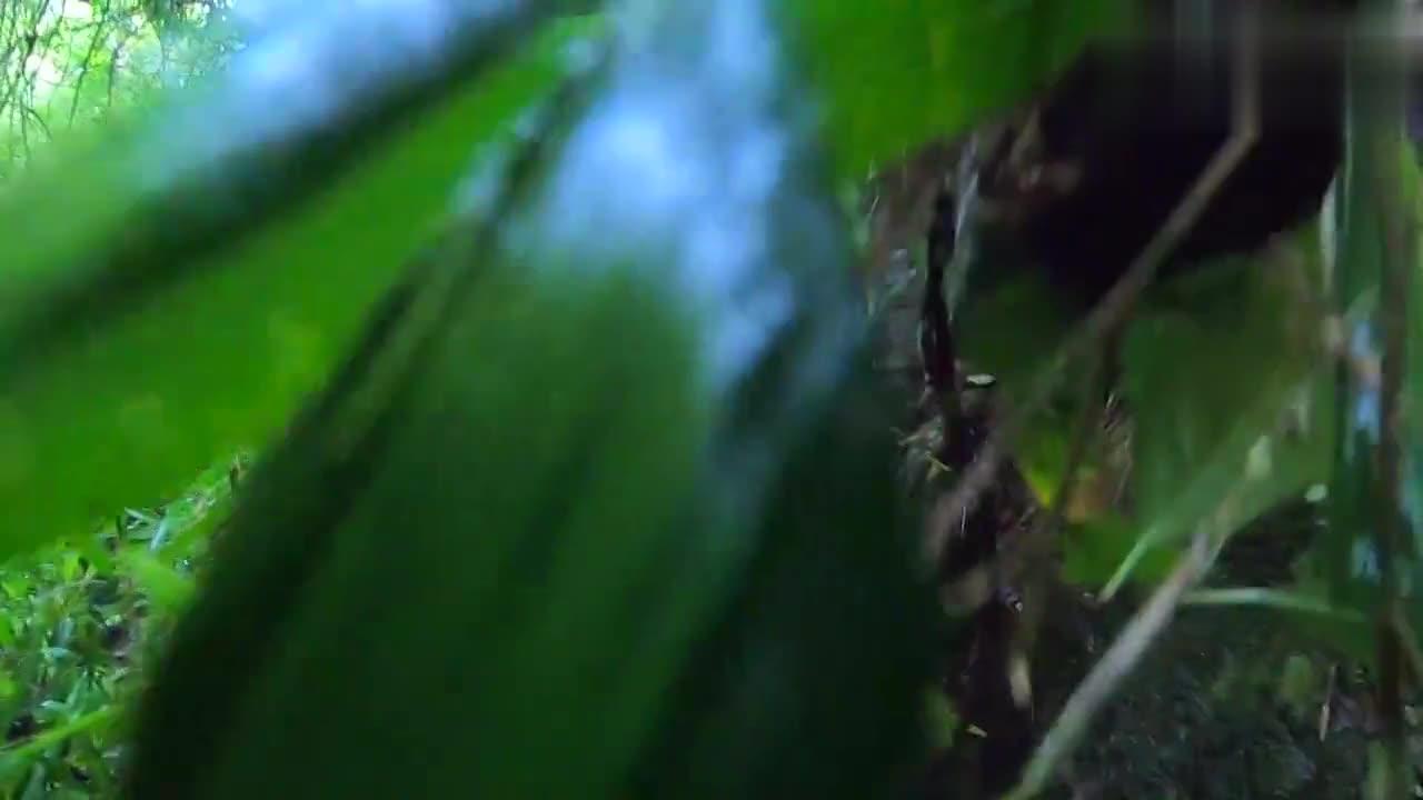 徒步深山发现一窝鸟蛋和雏鸟,该怎样把它们保护起来?