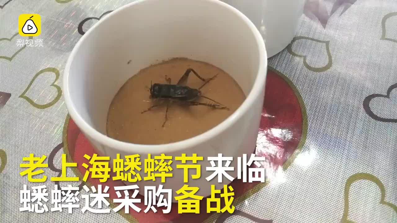 大战将至蛐蛐迷采购备战蟋蟀节