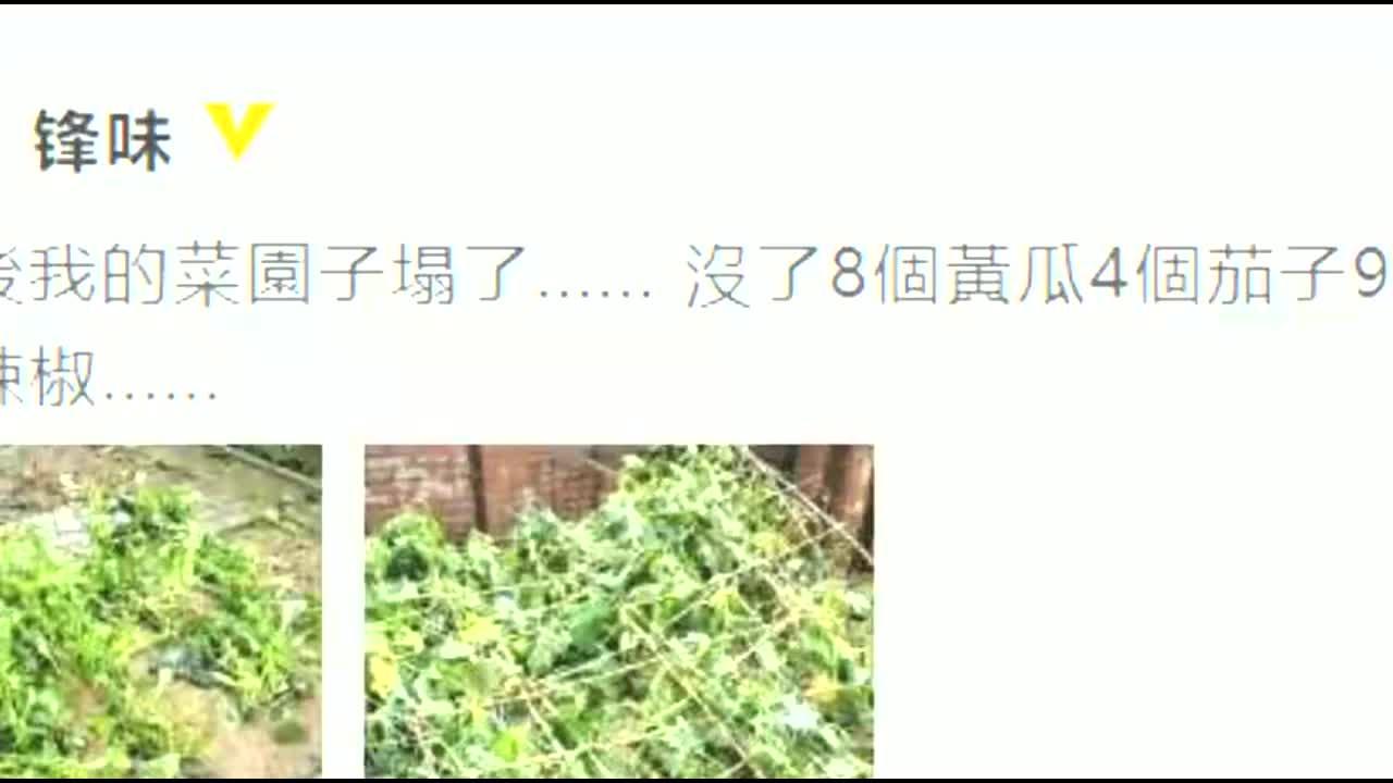 """谢霆锋菜园遭冰雹袭击 现场一片狼藉损失""""惨烈"""""""