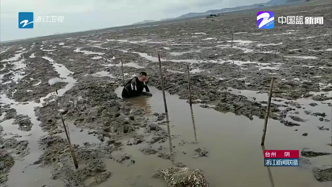 温岭精心救治搁浅江豚并放归大海