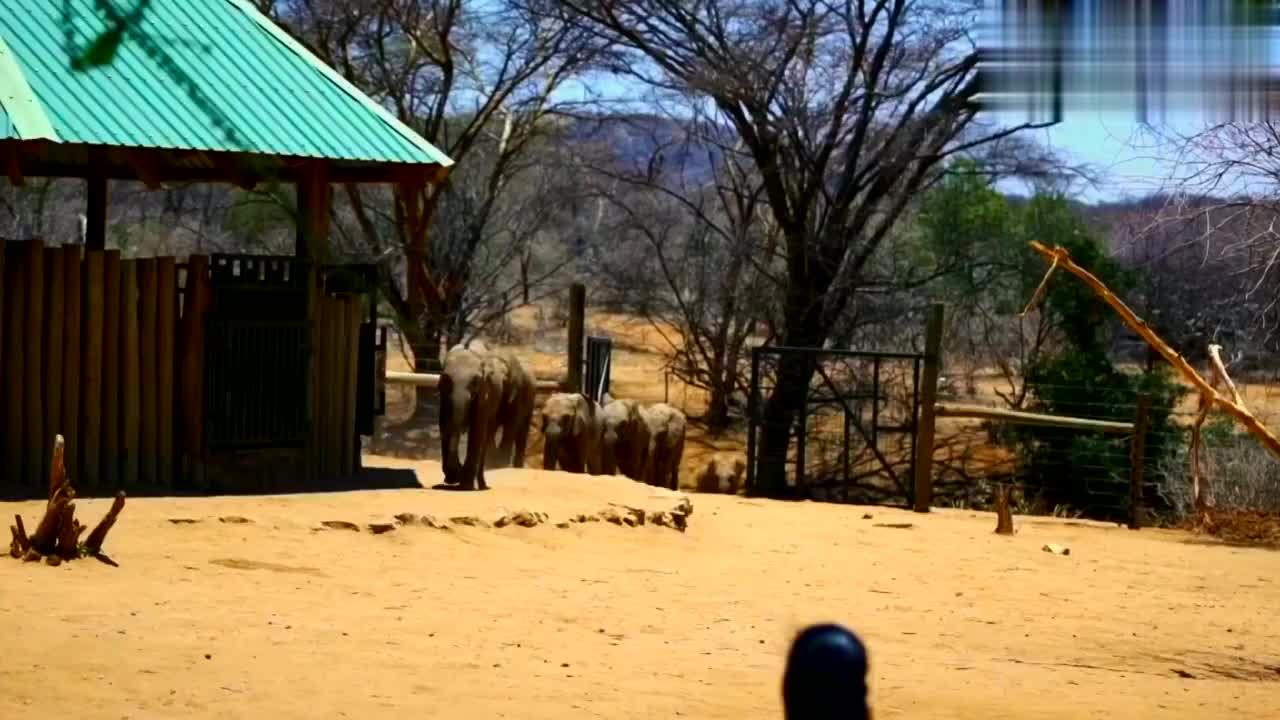 肯尼亚,桑布鲁保护区,被遗弃的小象在这里快乐成长