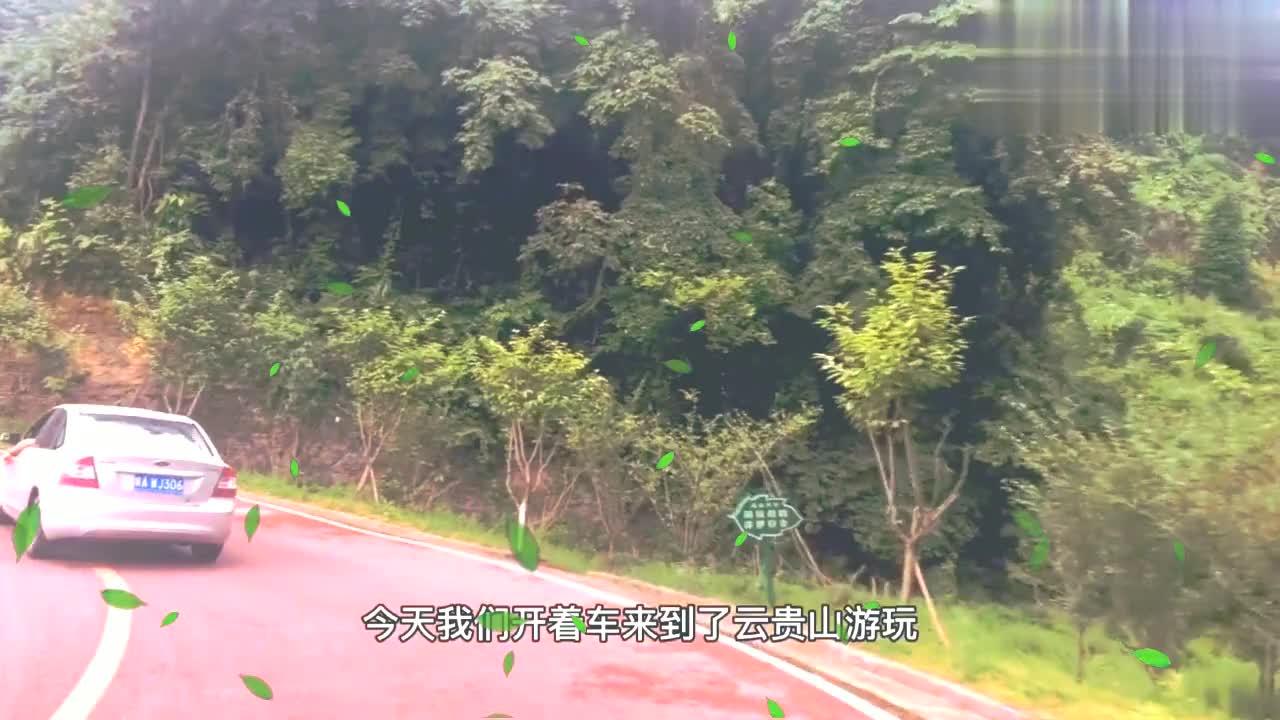 二宝妈和孩子的茶乡之旅,云贵山休闲茶庄自驾游,美景尽收眼底