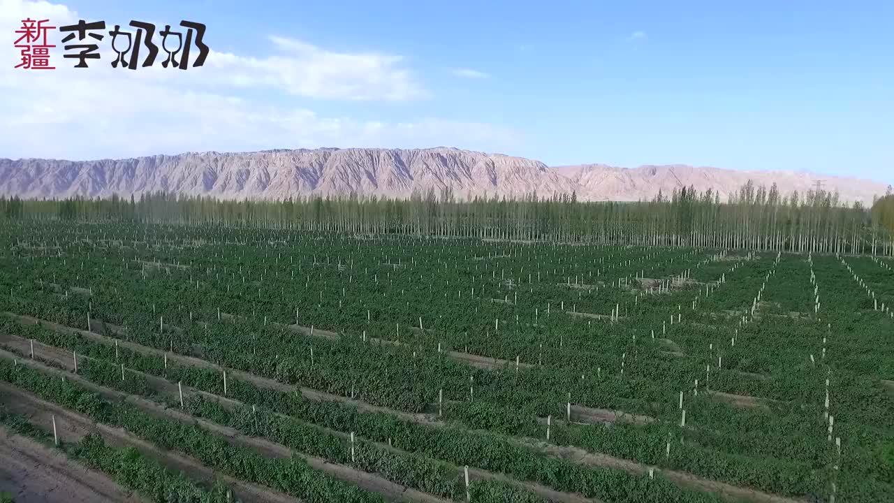 新疆李奶奶家生产的葡萄酒,4小时入罐,保证新鲜和质量
