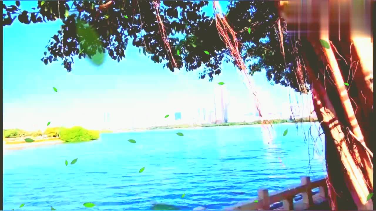 作为一个内陆人,来到厦门一定要去看海,海湾公园一个浪漫的地方