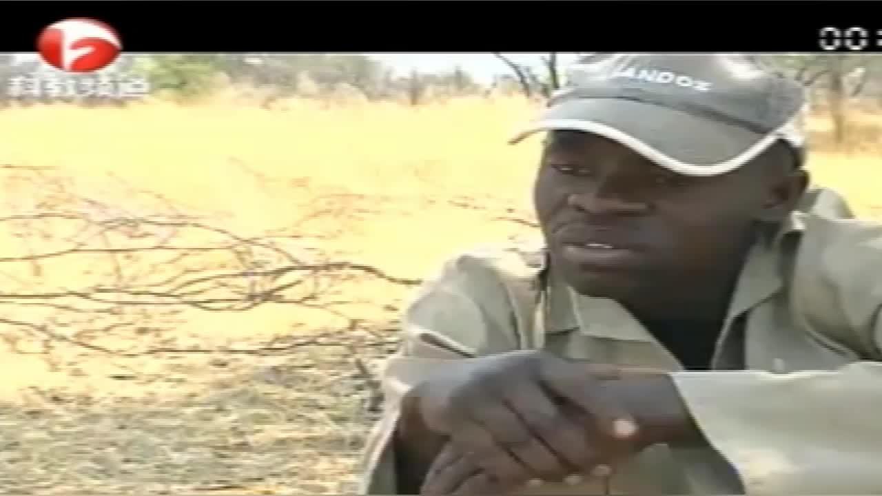 狒狒真讨厌,村民们辛苦藏起来的胡萝卜,居然都被它们挖出来吃掉